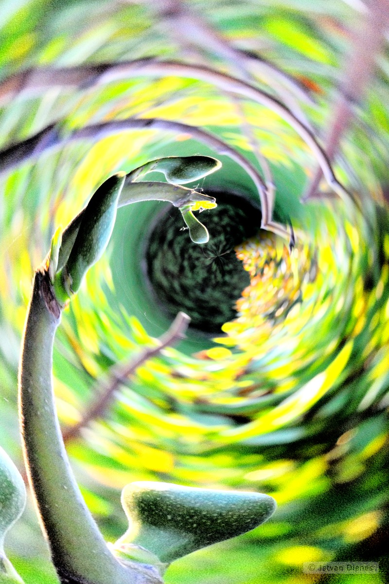Twist-Art-Garden_KF5_1745_x1b